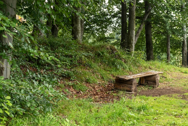 Wooden bench - resting place near woods