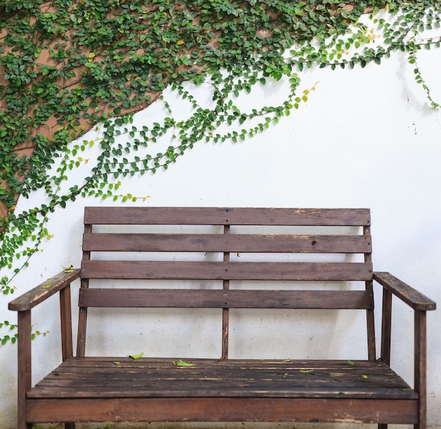Wooden bench on white wall covered with climbing fig (creeping fig, ficus pumila) leaves.