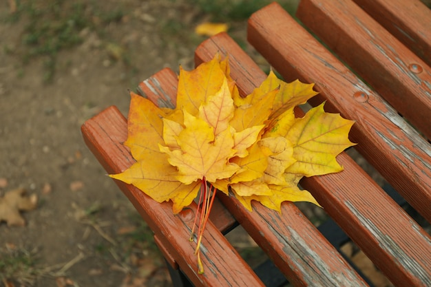Wooden bench with yellow autumn leaves