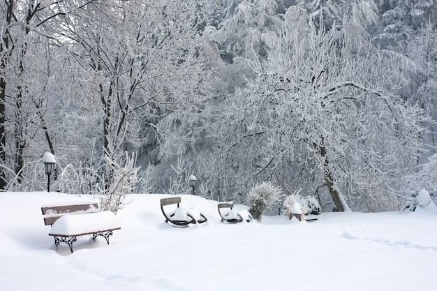 Wooden benches covered with snow near the trees on the snow-covered ground