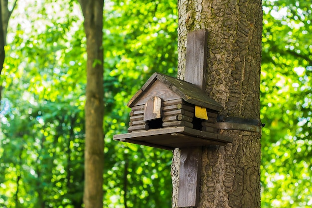 Wooden bird feeder on a background of green trees
