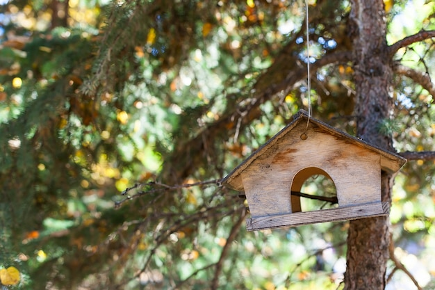 Wooden bird feeder in the forest on a tree.
