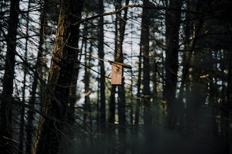 Wooden bird feeder on tree in forest