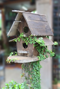 Wooden bird houses covered with ivy