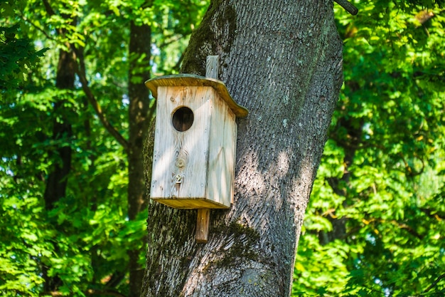 Wooden birdhouse hanging on tree in the city park.