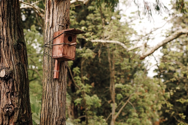 Wooden birdhouse mounted on a tree trunk taking care of the birds