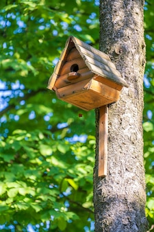 Wooden birdhouse on a tree in the forest and park, close up. kyiv, ukraine