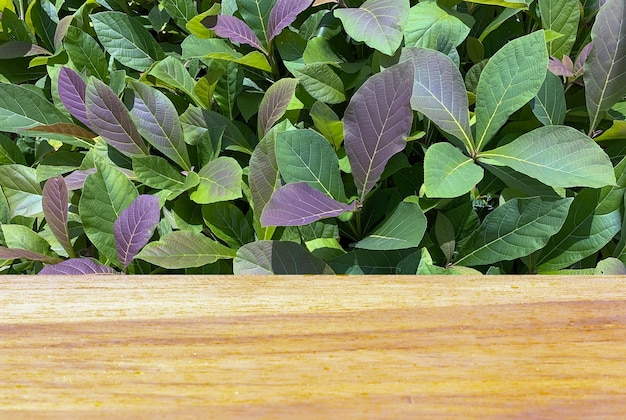 Wooden board empty table in front of teak plants seedling tectona grandis for  display of product