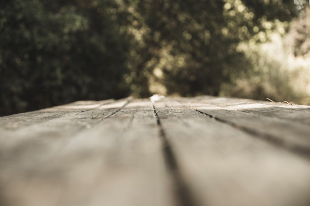 Wooden board in forest