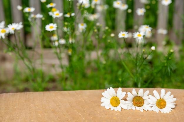 Деревянный стол перед цветками ромашки. для монтажа вашего продукта