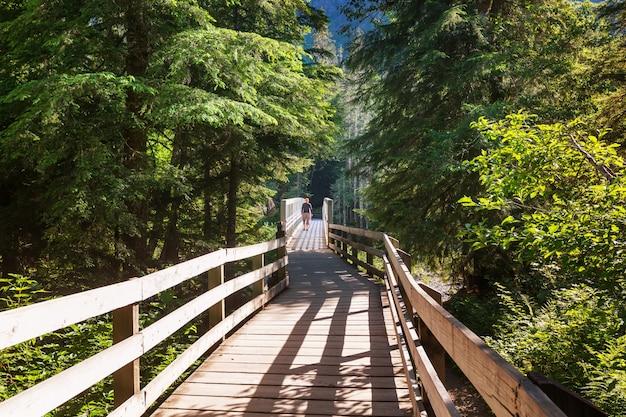 森の中の木の遊歩道