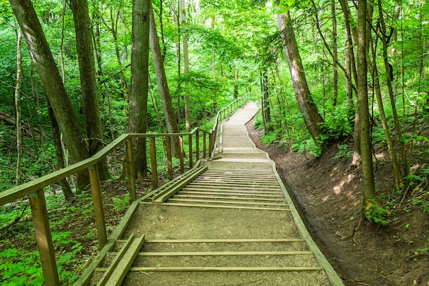 Wooden boardwalk tourist stairs trail with trees.