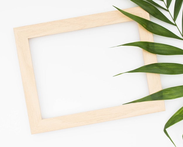 Wooden border of picture frame and green palm isolated on white background