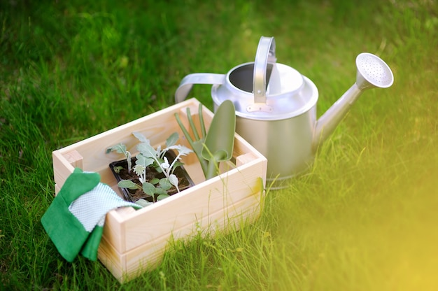 Wooden box, garden gloves, watering can, garden tools and young seedling