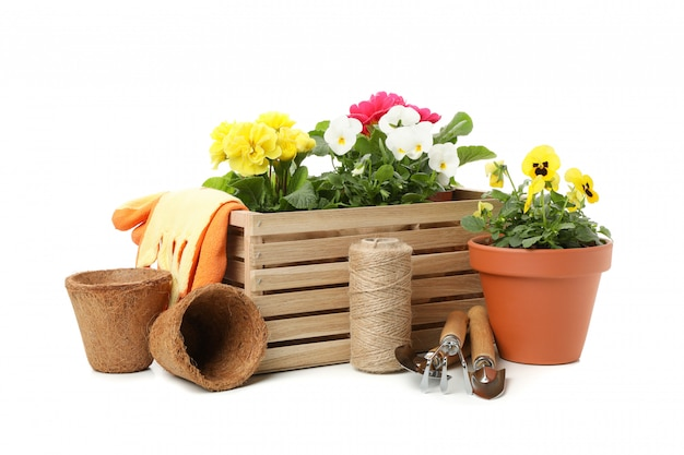 Wooden box, gardening tools and flowers isolated on white isolated