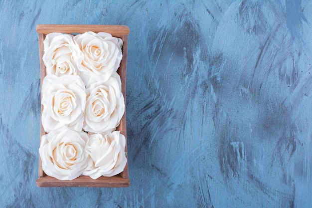 Scatola di legno di fiori di rosa bianca su blu.