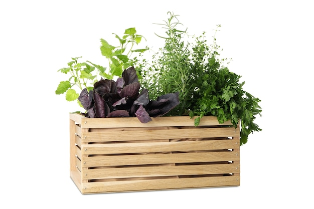 Wooden box with different herbs isolated on white background