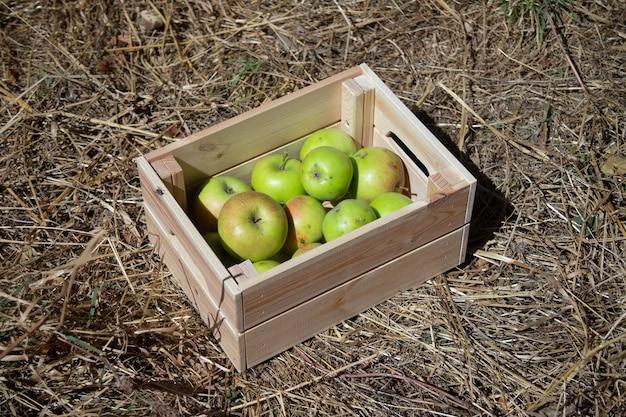 신선한 사과와 나무 상자