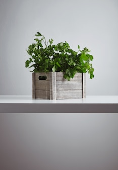 Wooden box with fresh green parsley and cilantro isolated on white table side view