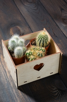 Wooden box with mini catuses