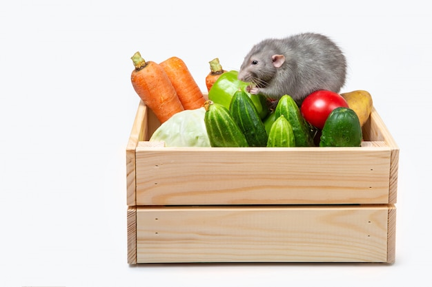 Wooden box with vegetables on a white wall. gray rat on the vegetables. agricultural products. fresh vegetables.