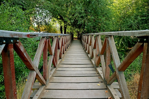 Wooden bridge across a river among lush green foliage in el calafate, patagonia, argentina