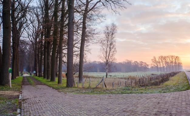 オランダの森への木製の橋とパッド、
