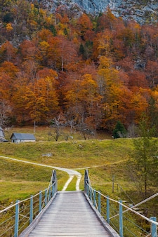 Wooden bridge and colorful orange trees in autumn season in slovenian countryside