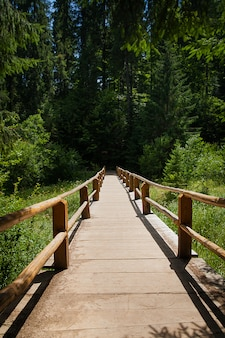 Wooden bridge over forest river