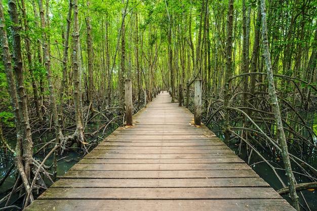 Деревянный мост в мангровых лесах в тонг пронг тонг, районг, таиланд