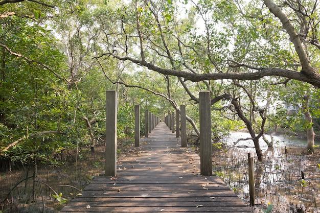 Деревянный мост в джунглях