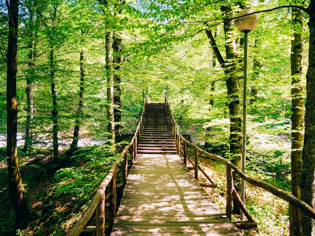 플리트 비체 호수 근처 숲에서 나무 다리