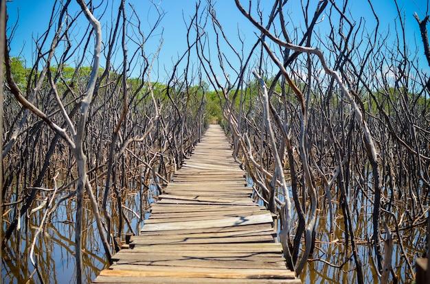Деревянный мост в мангровых болотах, пляж авелланас, коста-рика.