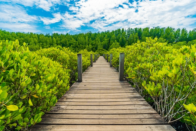 Wooden bridge at mangroves in tung prong thong or golden mangrove field, rayong, thailand