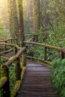 Wooden bridge in nature