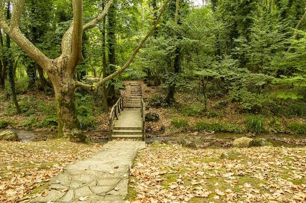 鬱蒼とした森の中の狭い川に架かる木造の橋