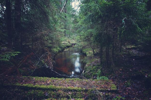 森の中の川に架かる木造の橋。