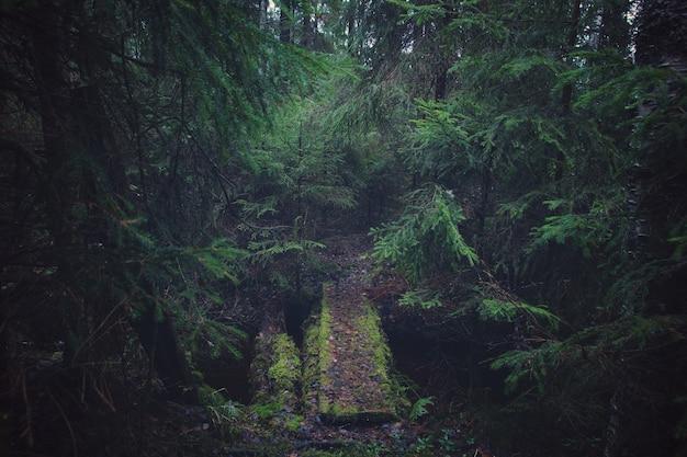 厚いモミの森と川に架かる木製の橋。