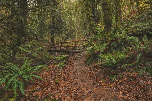 Ponte di legno in una foresta di alberi