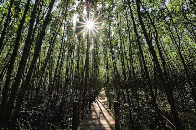 タイのチャンタブリー市にあるカンクラベン湾のマングローブ林にある木造の橋の歩道。
