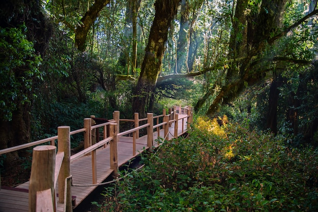 Wooden bridge walkway in nature trail at inthanon mountain peak at chiang mai thailand