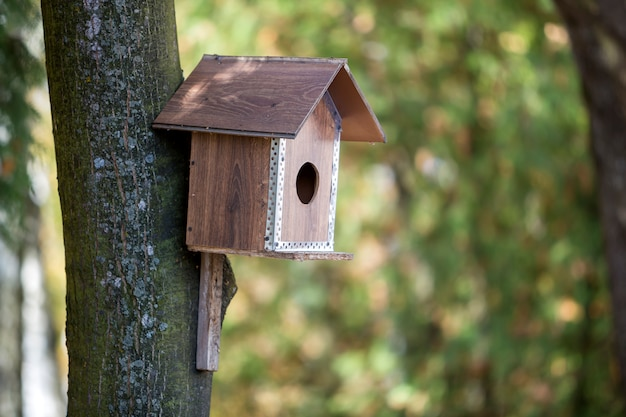 Wooden brown new bird house or nesting box attached to tree trunk in summer park or forest on blurred sunny green foliage bokeh .