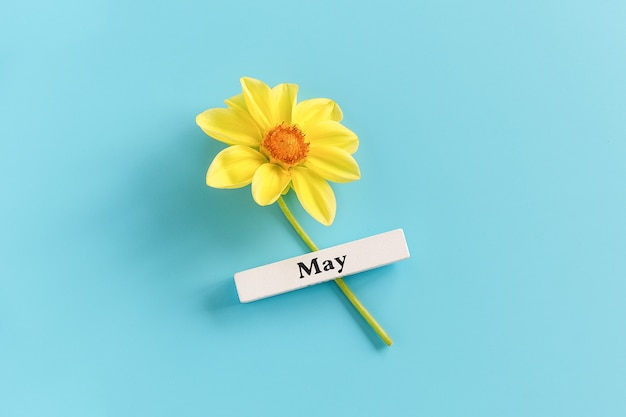 Wooden calendar spring month of may and yellow flower on a blue background. copy space. minimal style.