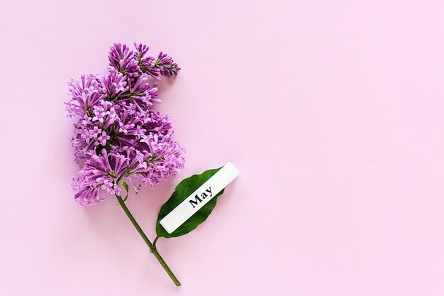 5月の木製カレンダー春月とピンク色の背景にライラックの枝。コピースペース。最小限のスタイル。