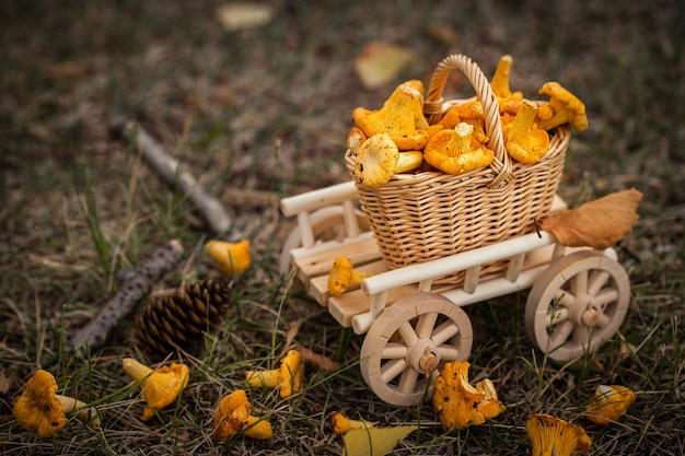 A wooden cart with  fresh mushrooms vegetarian food