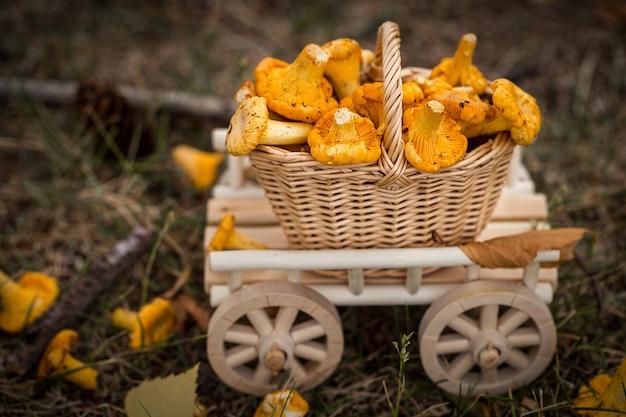 A wooden cart with  fresh mushrooms vegetarian food