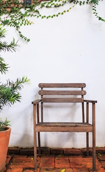 Wooden chair on white wall covered with climbing fig (creeping fig, ficus pumila) leaves