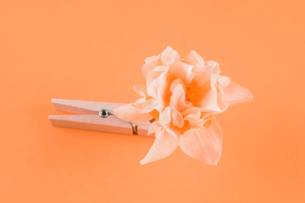 Wooden clothespin and flower on peach background