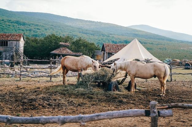 馬と木製の囲い。干し草を食べている美しい馬。馬用干し草付き大型カート