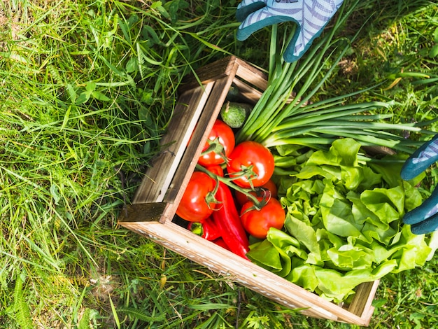 Wooden crate with fresh organic vegetables on green grass